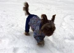 Одежда для небольших собак с доставкой в германию