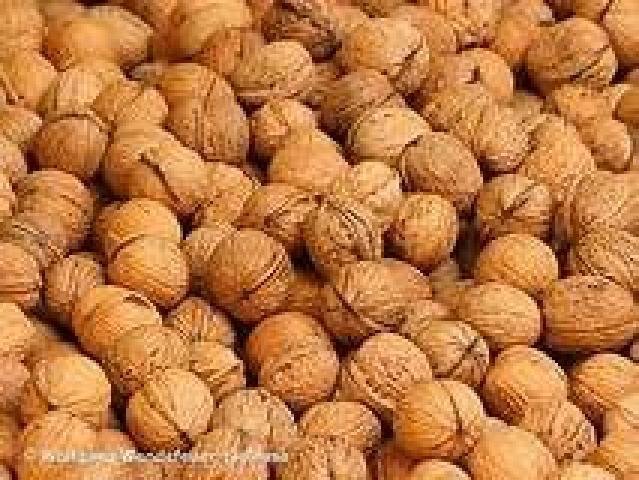 Bio-waldnüsse ernte 2018, 4€ kg
