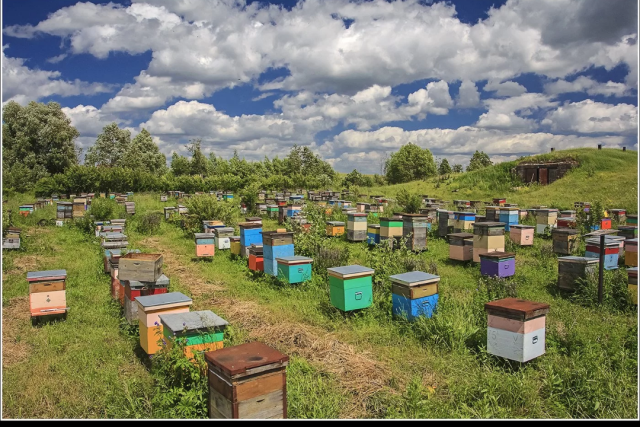 Продаю натуральный мёд на развес оптом