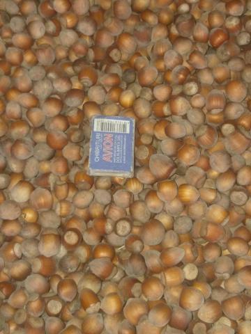 Продам лесной орех фундук