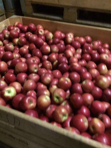 Apples Idaret