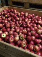 Apples Idaret