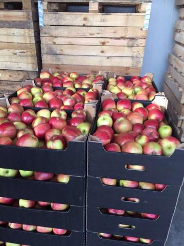 Apples Muzo