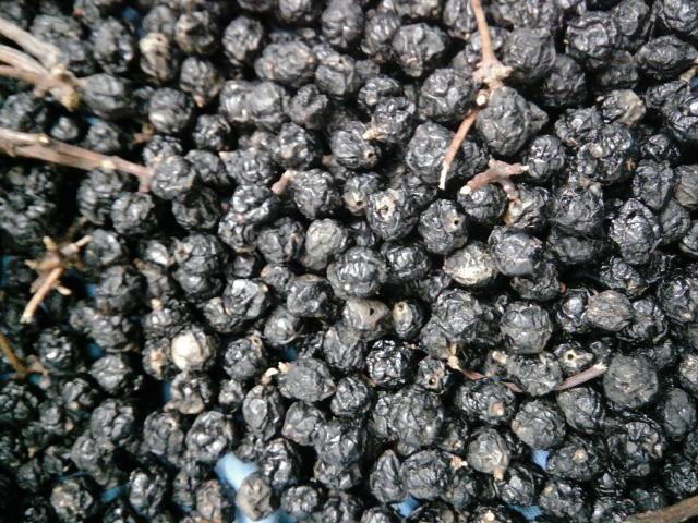 Продам ягоду амурского бархата