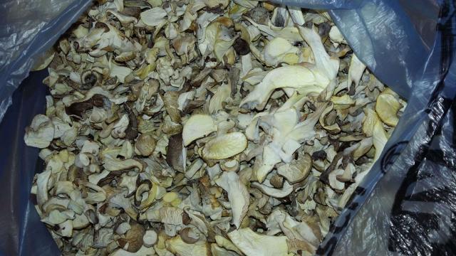 Продам сушеный гриб